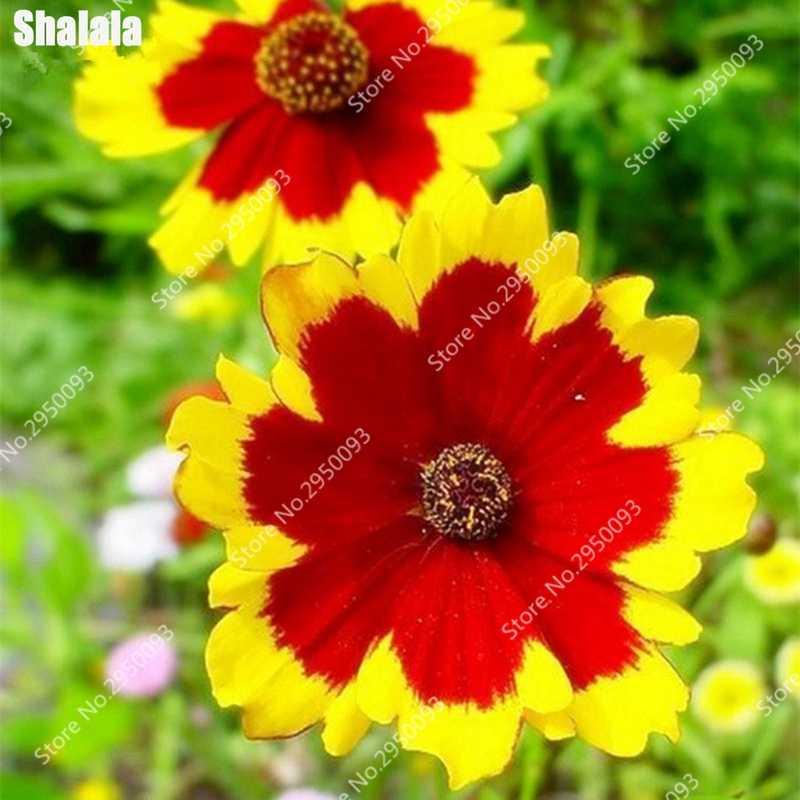Кореопсис Хризантема цветок растения уличное холодное и засухи бонсай Горшечное растение цветы для домашние садики 100 шт./пакет