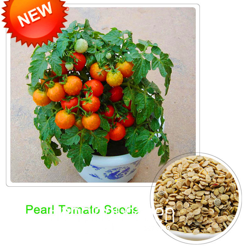 New Fresh Seeds Red Pearl Tomato Seeds,Fruits and Vegetables Potted Mini Tomato Seeds Balcony for Home Garden 100 pcs/lot,#7CTGP