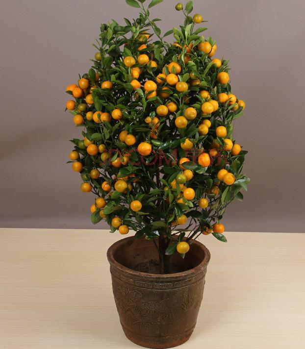 100 pcs Edible Fruit Mandarin Indoor Bonsai Tree Seeds Citrus Bonsai Mandarin Orange Seeds Bonsai Seed Seeds Flower