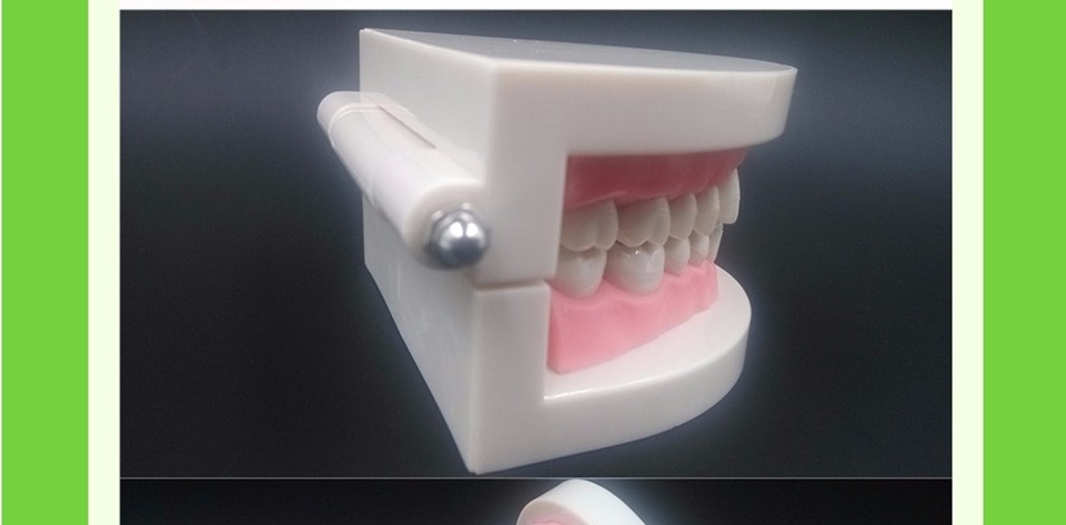 Teeth Model0000010