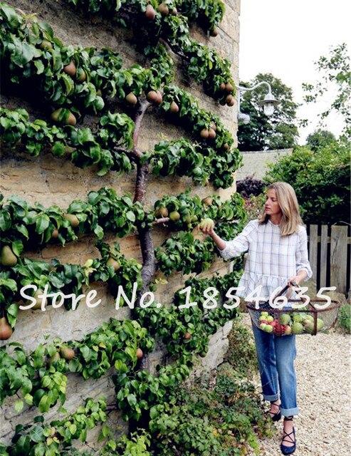 10Pcs Climbing Apple Tree Seeds Dwarf Bonsai Apple Tree Organic Fruit Seeds  For Home Garden Planting