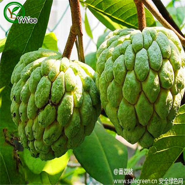 My first plane trip essay photo 10