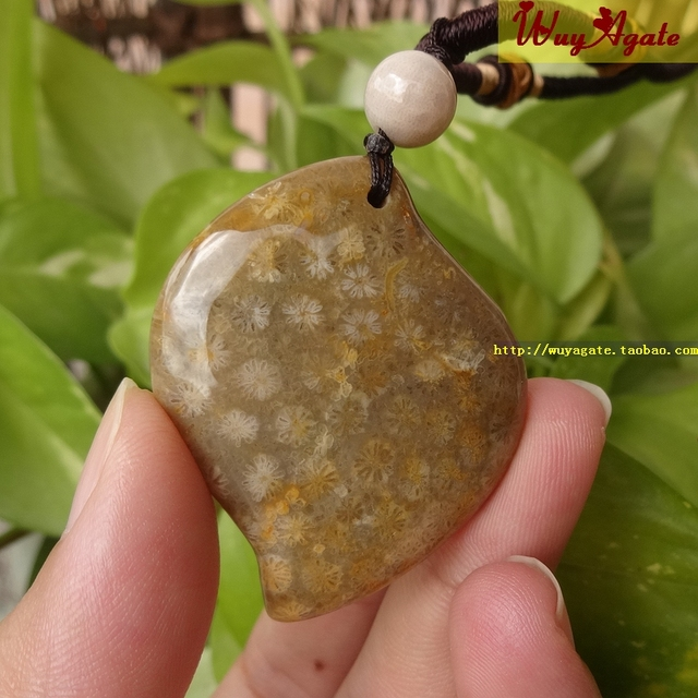 Taiwan natural organic gems fossils fossil coral jade jade taiwan natural organic gems fossils fossil coral jade jade pendants full flower chrysanthemum pendant mozeypictures Gallery