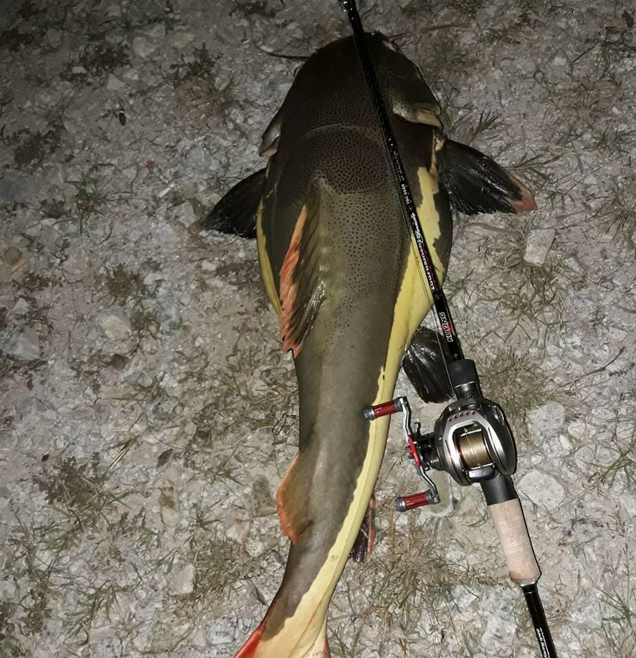 pesca ação rápida média pólo peixe para snakehead