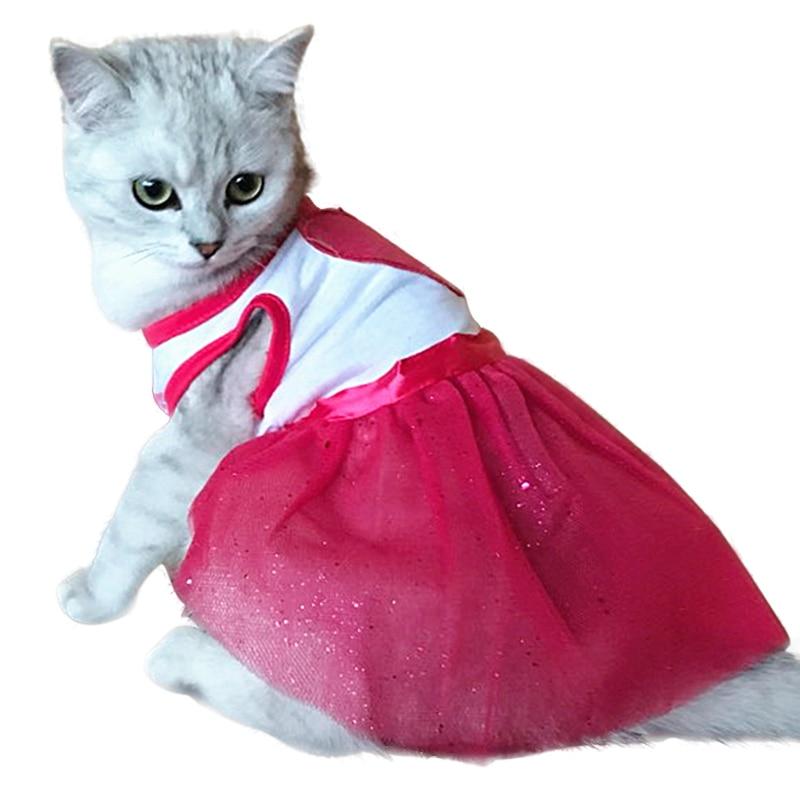 Картинки котята в платьях возможностью