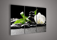 3 Panel Wall Art Botanical White Orchid Picture Oil Painting On Canvas Paintings Contemporary Decorative Paper
