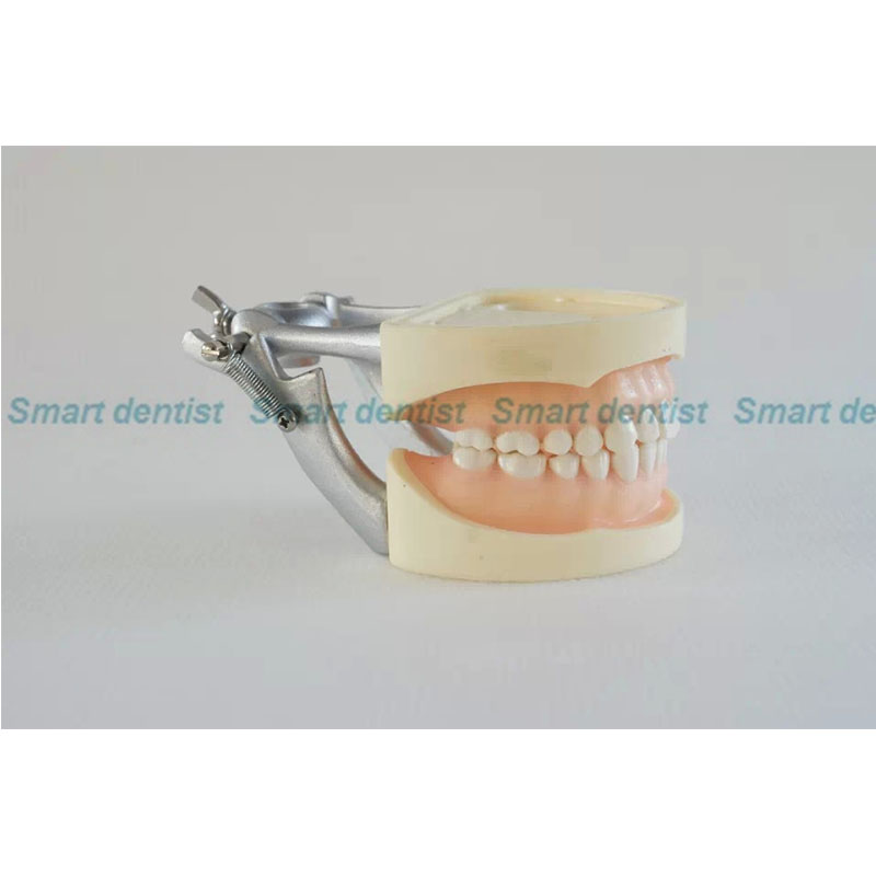 2016 Dental Soft Gum Practice Teeth Model for Students with Removable Teeth 2016 dental orthodontics typodont teeth model half metal half ceramic brace typodont with arch wire