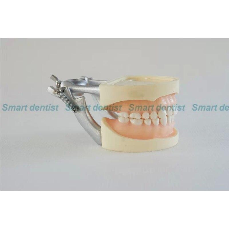 Dental Gomma Morbida Pratica Denti Modello per Gli Studenti con I Denti Smontabili DEASINDental Gomma Morbida Pratica Denti Modello per Gli Studenti con I Denti Smontabili DEASIN