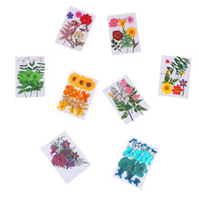 1bag Decorative 3D Natural Dried Flowers DIY Pressed Herbarium Flower Crafts Glass Globe Filler Findings(China)