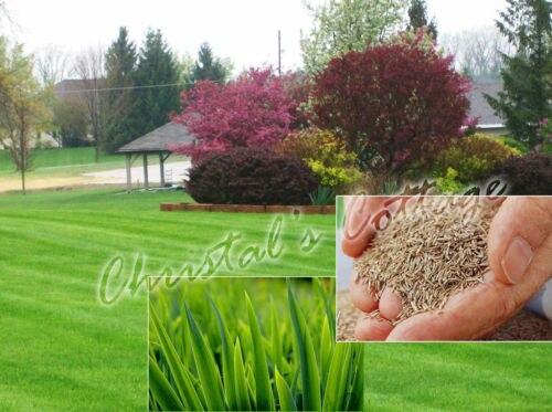 achetez en gros zoysia herbe semences en ligne des grossistes zoysia herbe semences chinois. Black Bedroom Furniture Sets. Home Design Ideas