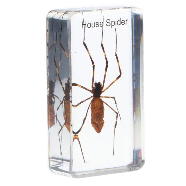 Insekt muster Schmetterling/Spinnen/Käfer/Skorpion Rechteck form mit klaren hintergrund Briefbeschwerer Sammlung Geschenk