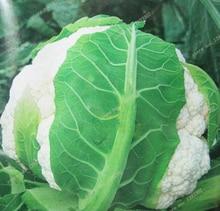 100 PCS cauliflower seeds cauliflower seeds of many colors for the family garden NO – GMO rare organic vegetable seeds