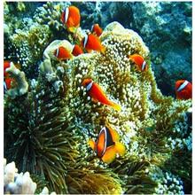 beibehang 3D floor sea world clown fish tiles custom large fresco pvc thick wear resistant cover papel de parede