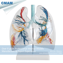 CMAM-LUNG02 Bronchial Tree with Larynx & Transparent lungs, 2 times Full Life Size , Anatomy Models > Lung Models