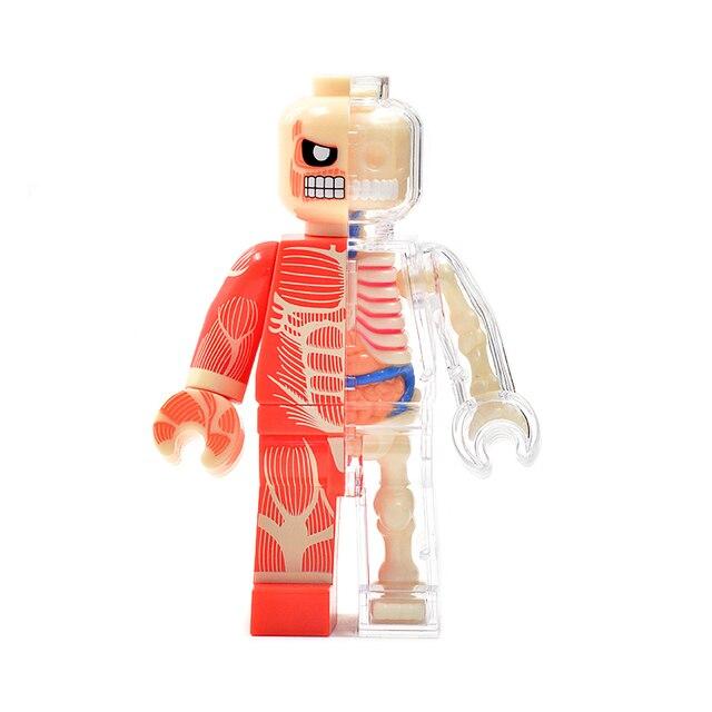 1 unids anime 4d maestro esqueleto anatomía modelo ladrillo hombre ...