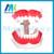 Manka Cuidar-modelo de crianças Do Jardim de Infância a escovação Dos Dentes Oral Dentes dentista demonstração Treinamento Aprendizagem Precoce Educação