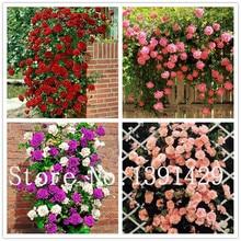 100pcs Thailand Climbing Rose seeds, rare plant rose seeds, home & garden, bonsai garden flowers. Multi-color selection