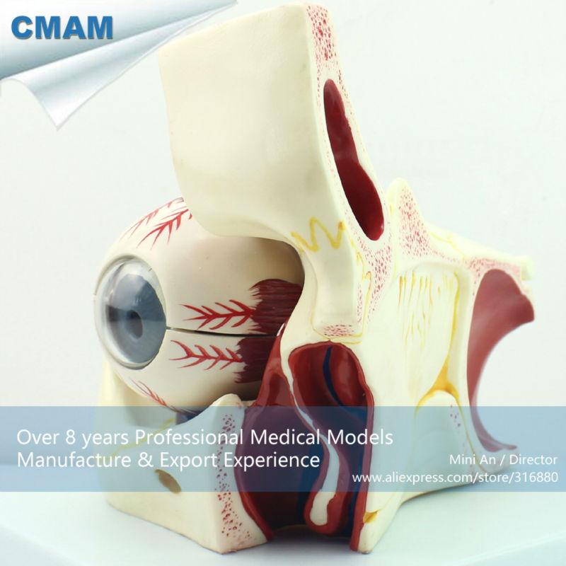 Großartig Auge Anatomie Animation Bilder - Menschliche Anatomie ...