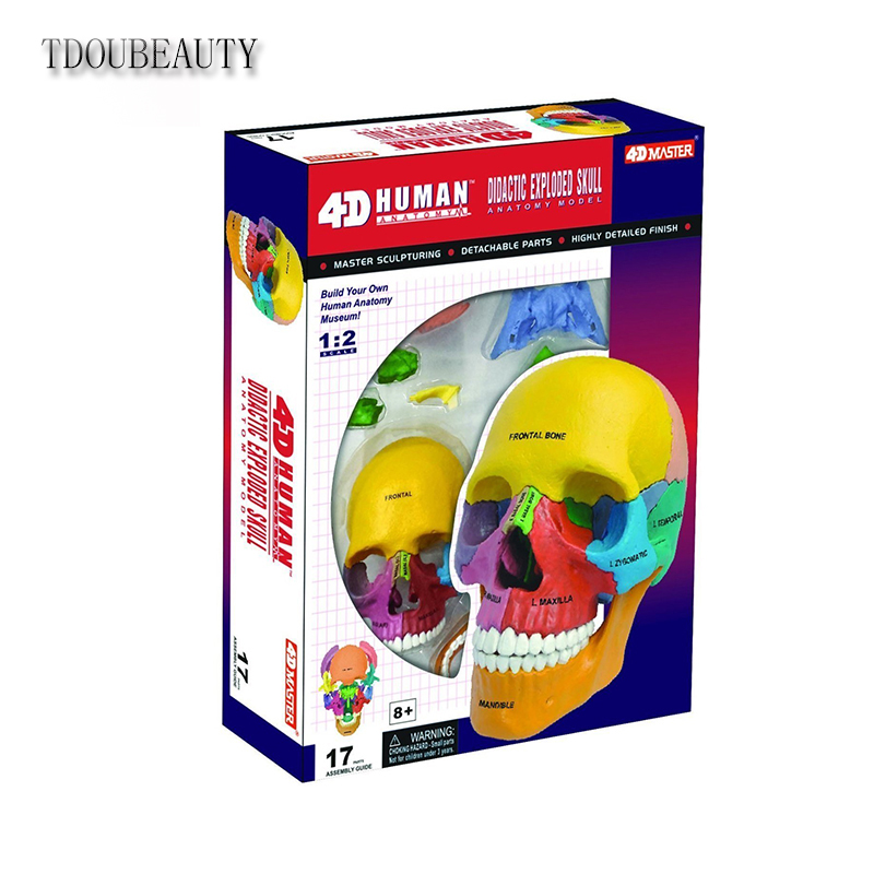 TDOUBEAUTY Anatomica Human Skeleton 4D Vision Didactic Exploded Skull Model 1/2 4D Master Free Shipping plastic standing human skeleton life size for horror hunted house halloween decoration