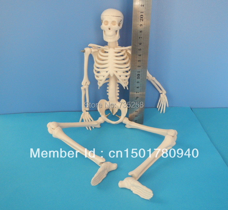 45CM Mini Skeleton,human Skeleton Model,Mini Skeleton Model free shipping ad9857astz ad9857 qfp 10pcs lot ic