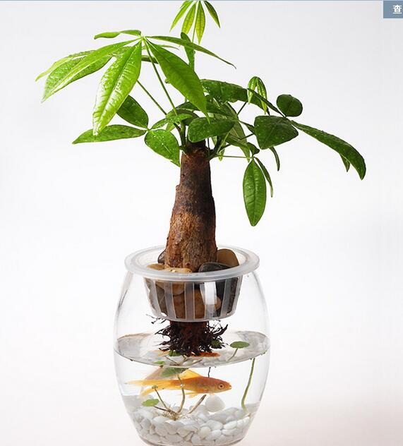 How To Bottom Water Plants