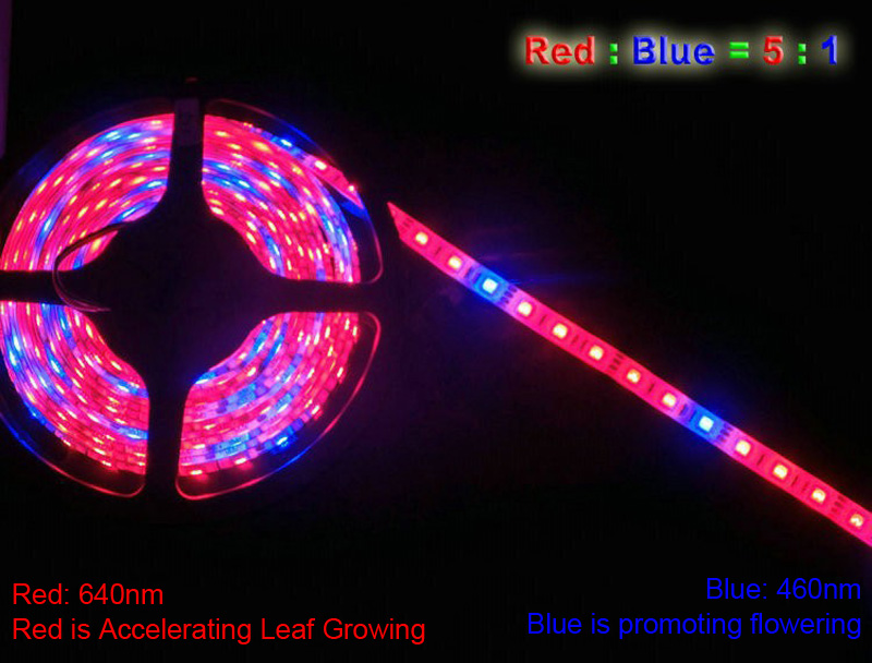 GBKOF 5M LED Plant Grow Lights grow strip Waterproof 5050 Hydstems growing 300LEDs Full spectrum Growth plant light Red Blue 41(15)