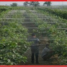 5 м садовая защитная сетка для сада, защищенная от птиц, садовая Белая нейлоновая сетка, защищающая от насекомых, пластиковая сетка, настраиваемая на ваш размер