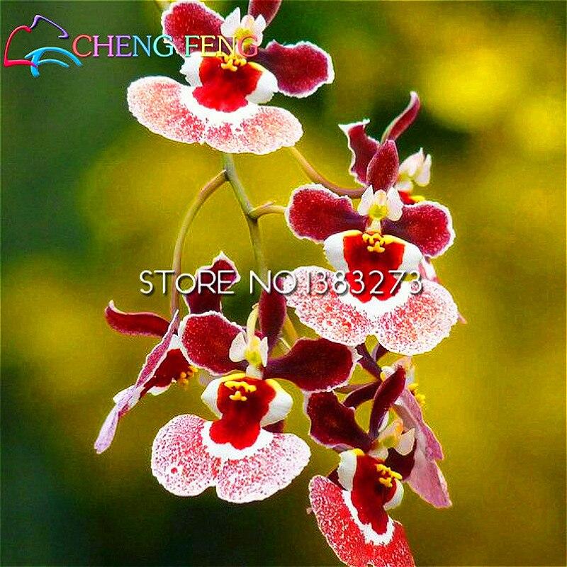 10pcs Lot Artificial Flower Silk Dancing Orchid Oncidium Flowers Wedding Decoration