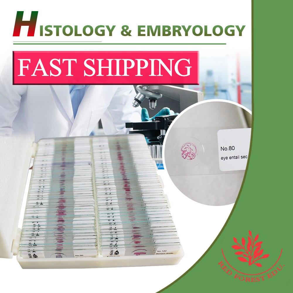 High Quality Mammal tissue anatomy mammal histology slides-in ...