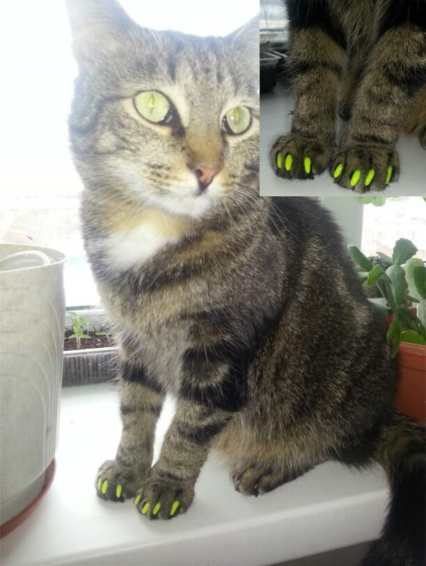 No Glue New Supplies 200pcs Soft Cat Pet Nail Caps Claw Control Paws ...