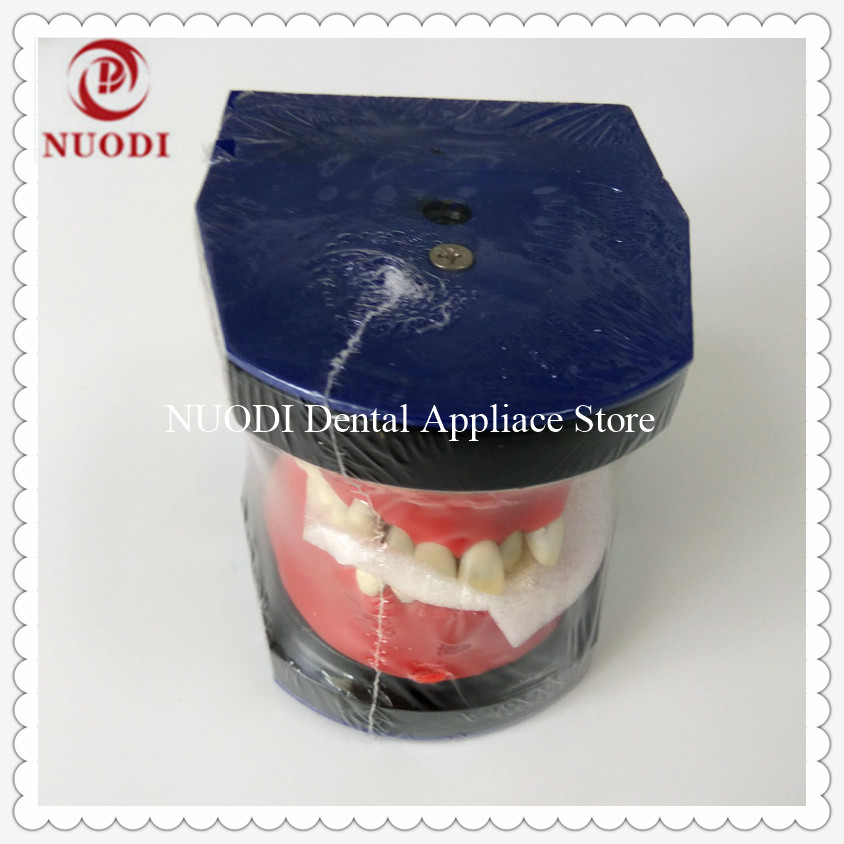 M8017 Typodont practice model/Dental Orthodontic Operation Model/Metal Dental Study Orthodontic Model/Orthodontic training Model teeth orthodontic model metal braces teeth wrong jaws model demonstration tooth orthodontic training model