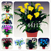 100 Pcs Calla Lily Bonsai,Rare Plants Flowers,Room Rhizome Zantedeschia Aethiopica, Houseplants Home Garden