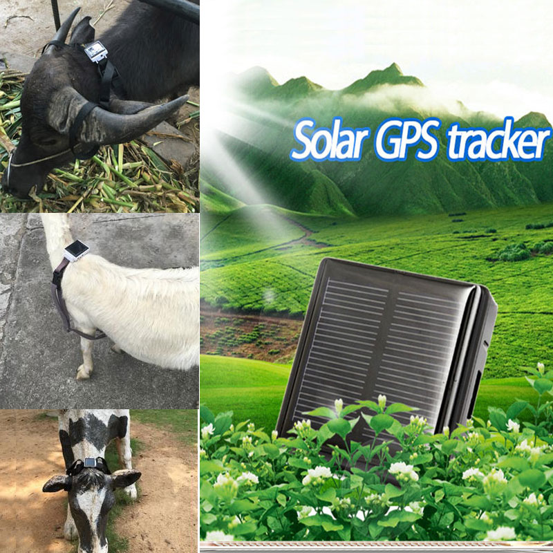 Solar Animal GPS tracker Never Power OFF Remove Alarm Waterproof With  Collar For Dog Cow Sheep Support Free Monitoring APP
