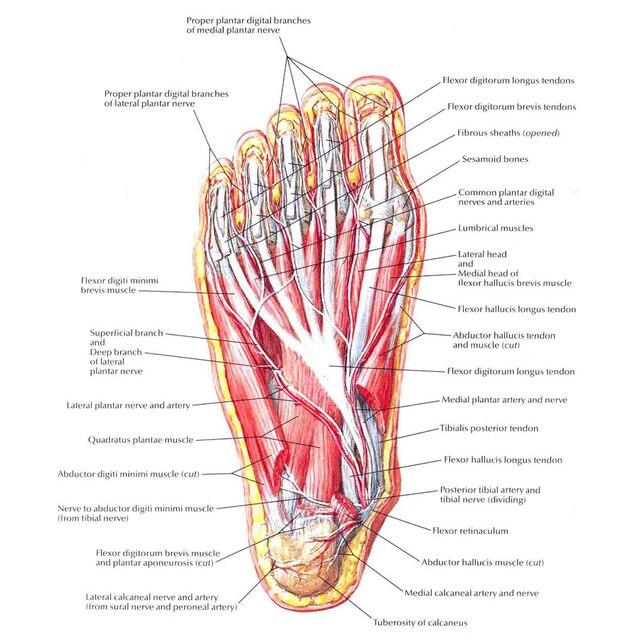 J0865 la Estructura Del Cuerpo Humano Anatomía Gráfico Pop 14x21 ...