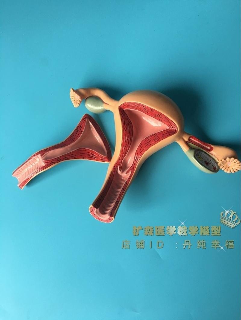 Смотреть женское матку бесплатно онлайн фото 444-439