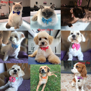 Image 3 - 120pcs Mixed Styles Pet Puppy Dog Cat Bow Ties/Bowties Adjustable Dog Grooming Bows Accessories Dog Ties Pet Products