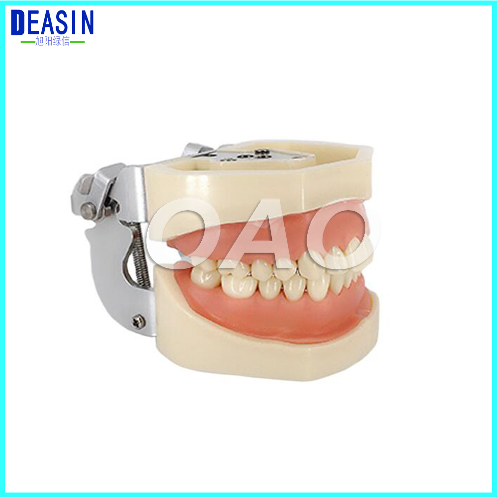 Factory price Dental 28 pcs Teeth Model for Dental Practice use Dental All Removable Teeth Model dental manikin dental typodont model dental orthodontic model for training practice with wax teeth model and occluder