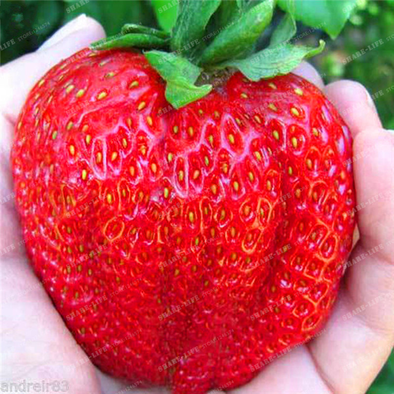 ягодки бесплатная доставка