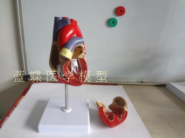 все цены на 1:1 medical heart teaching of human heart anatomy model B hyperchromatic heart model