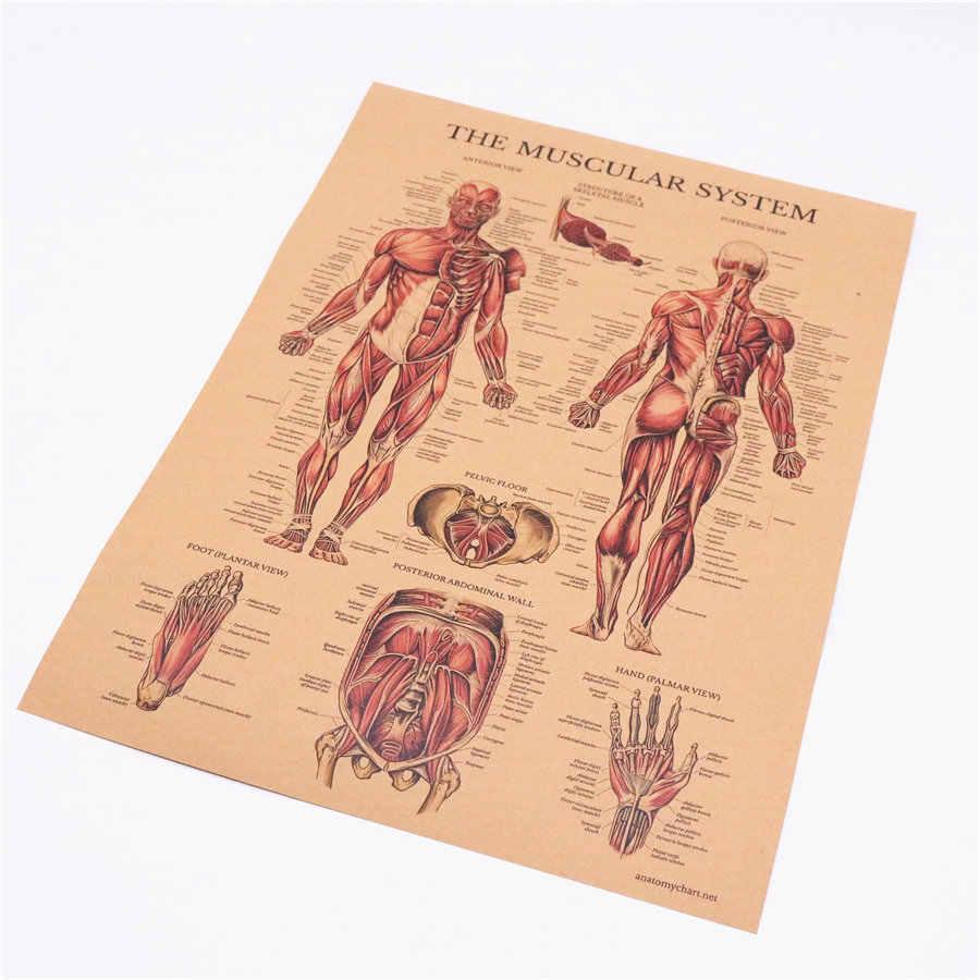 Cơ thể con người hệ thống cơ Cấu Trúc HD Vintage Giấy Poster Thanh Trang Trí Nhà Retro Kraft Giấy Tranh 42x30cm