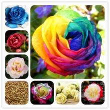 Rose Supplies Selection DIY