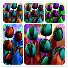 Time-Limit!! 50 PCS Tulip Bonsai Hydroponic Bonsai Flower Tulip Bonsai,Garden Decoration Bonsai Flower Plant Most Beautiful(China)