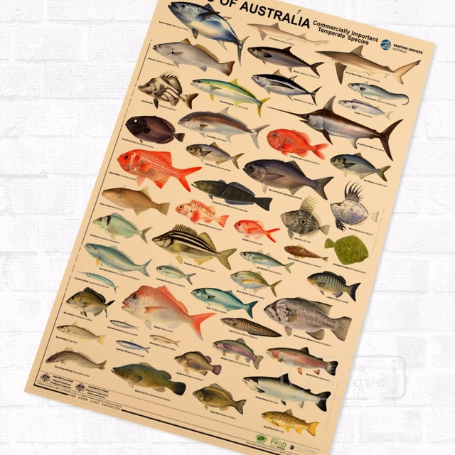 Australia Fishes Marine Organism Vintage Retro Kraft Coated Poster  Decorative DIY Wall Canvas Sticker Art Home