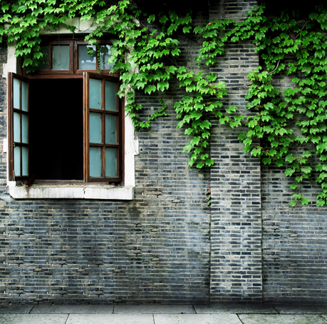 b34f2f3c6 5 * 6.5ft خمر الخلفيات قرميد جدار خلفية استوديو الأخضر يترك الخلفيات الزفاف  خلفية الصورة ل استوديو