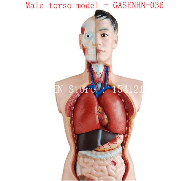 Tienda Online Visceral Anatómico anatomía Asexual tronco masculino ...