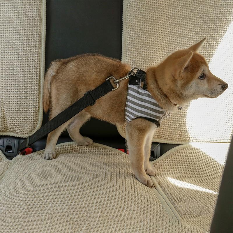 attacher chien en voiture