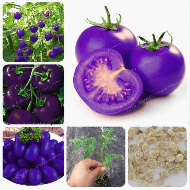 Bonsái de tomate de frutas moradas 100 piezas/envasado de verduras y frutas para el jardín del hogar * plantas de granja fáciles de crecer Bonsai