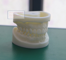 White corundum tooth model,Tooth system for practice model,Tooth model,Dental model