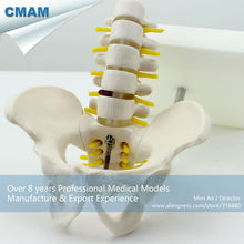 CMAM-PELVIS06 Half Life-Size Pelvis with 5pcs Lumbar Vertebrae Anatomy Model,Lumber Vertebrae Model