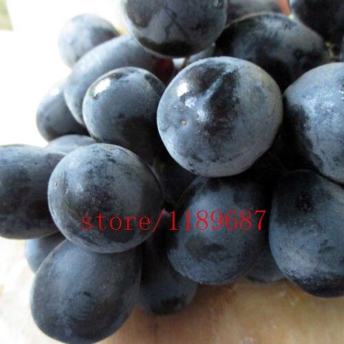 100pcs bag grape bonsai fruit NON GMO sweet delicious plant for home garden in Bonsai from Home Garden
